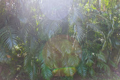 Palm tree branches. Close-up Goa. India Stock Photography