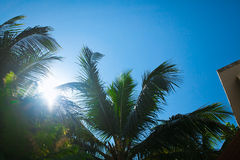 Palm tree branches Royalty Free Stock Photos