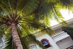 Palm tree branches. Close-up Goa. India. On the background of sky. Hotel Marinha Dourada Royalty Free Stock Photos