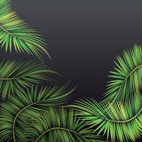 Palm tree branches. Royalty Free Stock Image