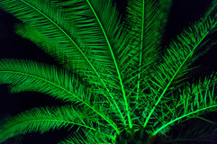Palm tree. Branches and leaves at night Stock Photos