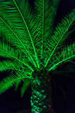 Palm tree. Branches and leaves at night Royalty Free Stock Image