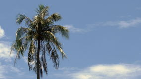 Palm tree with branches moving in the wind against a blue sky with clouds - 25p 4k stock video