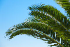 Palm tree branches over blue sky Royalty Free Stock Image