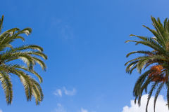 Palm tree branches over a clear blue sky Royalty Free Stock Photos