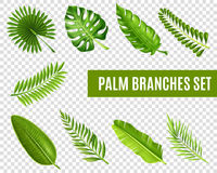 Palm Tree Branches Set Stock Photos
