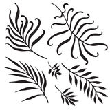 Palm Tree Branches Silhouette. Tropical Leaves and Twigs isolated on white background Stock Photography