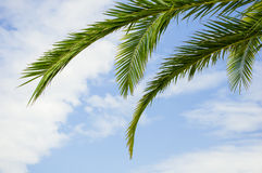 Palm tree branches Stock Photo
