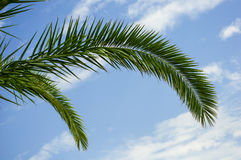 Palm tree branches Stock Photos