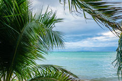 Palm tree branches trembling on stormy wind against seascape Royalty Free Stock Photography