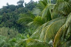 Palm tree branches and tropical jungle. In the background Royalty Free Stock Images