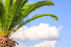 Palm Tree Branches. Vivid Green Palm Tree Branches Against Cloudy Sky Royalty Free Stock Image