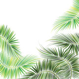 Palm tree branches. Royalty Free Stock Photography