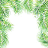 Palm tree branches. Royalty Free Stock Photo