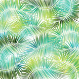 Palm tree branches on white background. Stock Photo