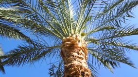 Palm tree at bright sunny day. Background of palm tree at bright sunny day stock video footage
