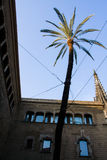 Palm tree between buildings. Royalty Free Stock Photo