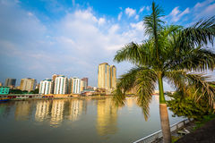 Palm tree and buildings along the Pasig River, seen from Fort Sa Royalty Free Stock Images