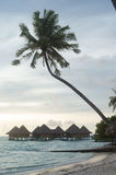 Palm tree and bungalows in Bora Bora Royalty Free Stock Photography