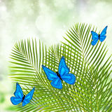 Palm tree with butterflies Stock Photo