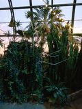 Palm tree and cactus in greenhouse royalty free stock photography