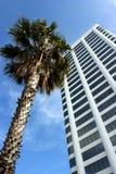 Palm tree in California stock photos