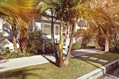 A Palm tree in California royalty free stock photo