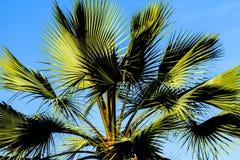 Palm Tree California Royalty Free Stock Photo