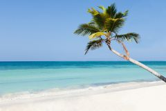 Palm tree on calm beach Royalty Free Stock Images