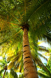 Palm tree canopies in tropical forest Stock Photo