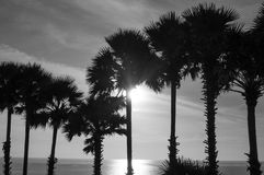 Palm Tree at Cape Phrom Thep Stock Photo