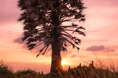 Palm Tree at Cape Phrom Thep Royalty Free Stock Photo