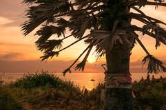 Palm Tree at Cape Phrom Thep Stock Photography