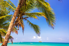 Palm Tree and Caribbean Royalty Free Stock Photography