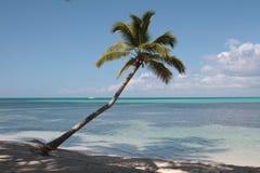 Palm tree on the Caribbean beach. Single Palm Tree on the Paradise Caribbean Island Stock Photography