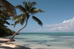 Palm tree on the Caribbean beach. Single Palm Tree on the Paradise Caribbean Island Stock Images