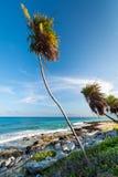 Palm tree on the Caribbean beach. Of Mexico Royalty Free Stock Photos