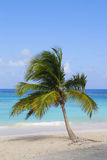 Palm tree at the Caribbean beach Royalty Free Stock Photography
