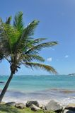 Palm tree on caribbean beach Royalty Free Stock Photo