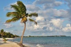 Palm tree on Caribbean beach. Mexico. Palm tree is on beach near Tulum in Mexico Royalty Free Stock Photo