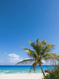 Palm tree on caribbean beach Stock Photo