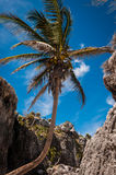 Palm tree on a Caribbean beach in Tulum Mexico. Palm tree on a beach under the ruins in Tulum, Mexico taken while traveling around Yucatan Royalty Free Stock Photo