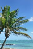 Palm tree in the caribbean. By coast Royalty Free Stock Photos