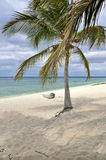 Palm tree on caribbean island beach Royalty Free Stock Photography