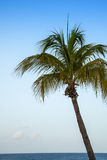 Palm tree with Caribbean ocean and blue sky Royalty Free Stock Photos