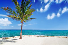 Palm tree at Caribbean Sea Stock Image