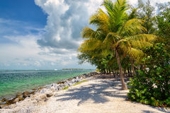 Palm tree on the Caribbean Sea, Florida Stock Photos