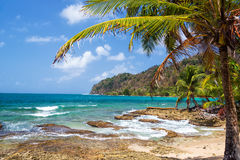 Palm Tree and Caribbean Sea Royalty Free Stock Images