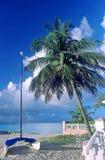 Palm tree and catamaran. A catamaran on the beach royalty free stock photos