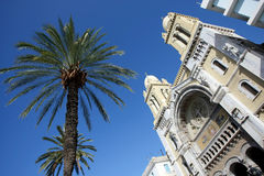 Palm tree and cathedral in Tunis Stock Images